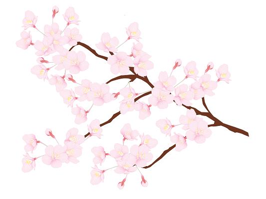 春分とはどういう意味?春分の日...