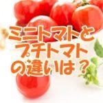 ミニトマトとプチトマトの違いは?